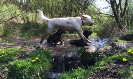Walkies! Dog friendly pubs and cafes